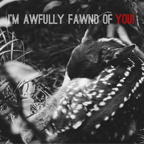 Fawnd of you