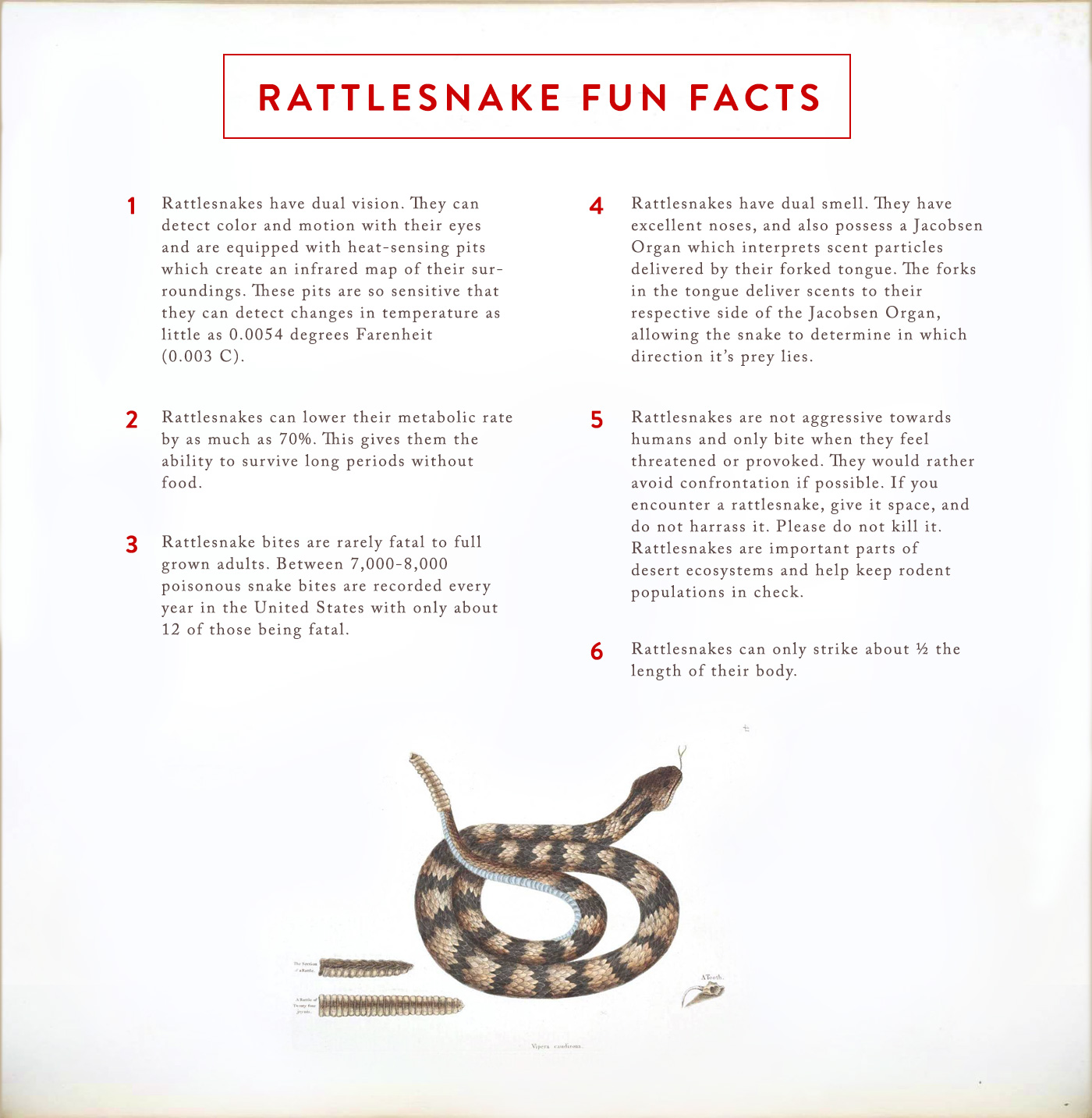 rattlesnake-fun-facts